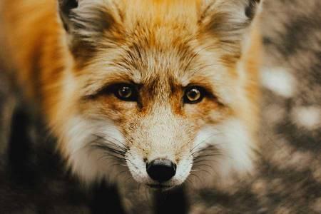 نکات عکاسی از حیوانات